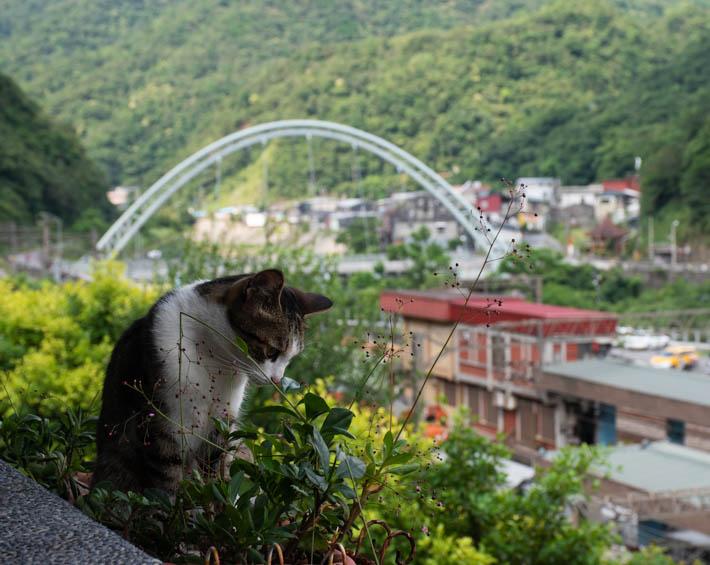 Houtong Cat Village – byn som tagits över av katter